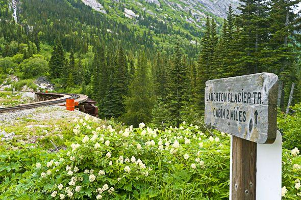 Alaska-adventure-Tongass-National-Forest-entrance