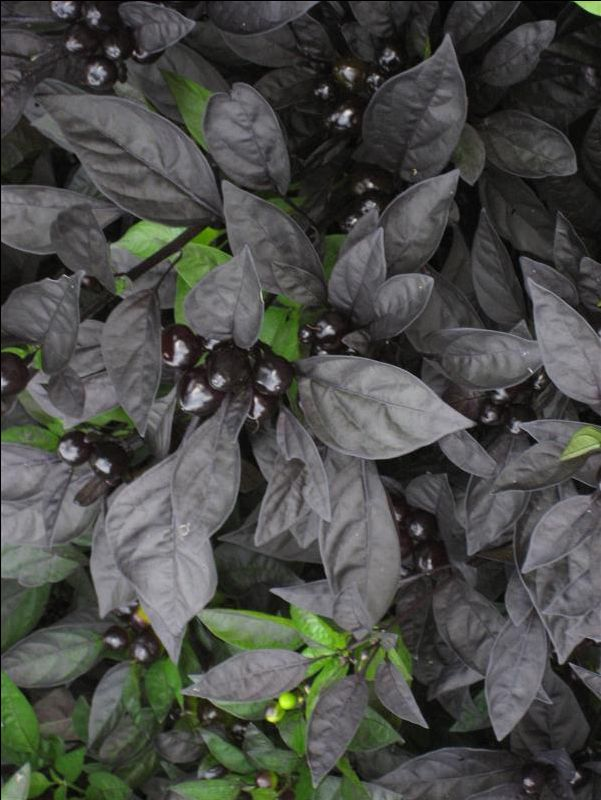 Negre Ca Noaptea A Collection Of Ideas To Try About