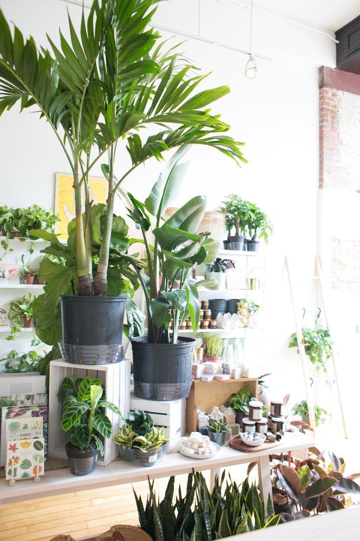 The Zen Succulent Plant Shop In Raleigh Plants House Plants