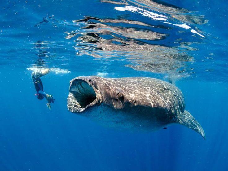 www.delunademiel.es. Si vas a mexico, en especial a Cancun, no dejes de probar este increible buceo con ballenas.