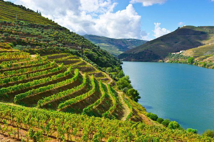 Les coteaux du Haut-Douro sont recouverts de pied de vignes. Le porto provient de ces vignobles escarpés ; les plus prestigieux étant situés dans les environs de Pinhão. La saison des vendanges, au début de l'automne, est la meilleure saison pour découvrir la région, alors en pleine ébullition.  ©  george kuna - Fotolia.com