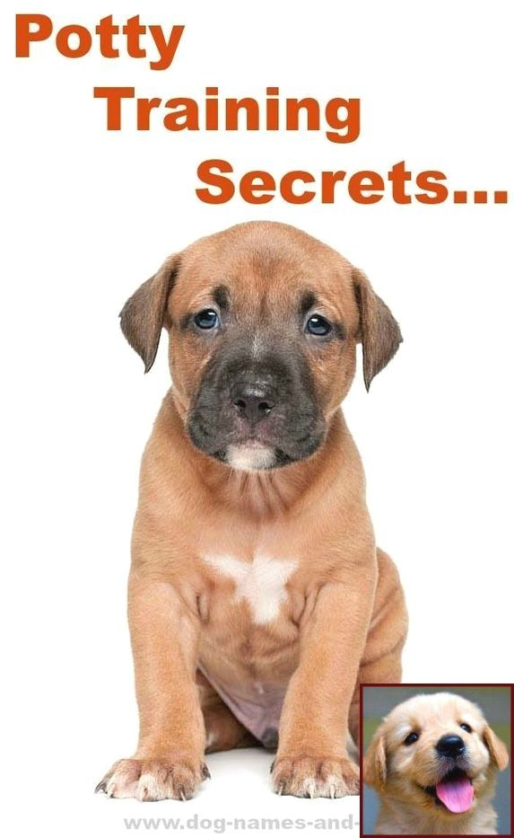 1 Have Dog Behavior Problems Learn About In House Potty Training