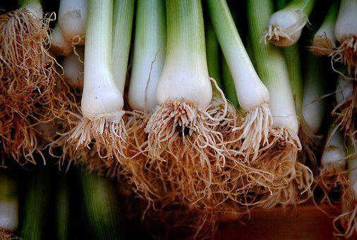 Onions, Leek, Vegetables, Root
