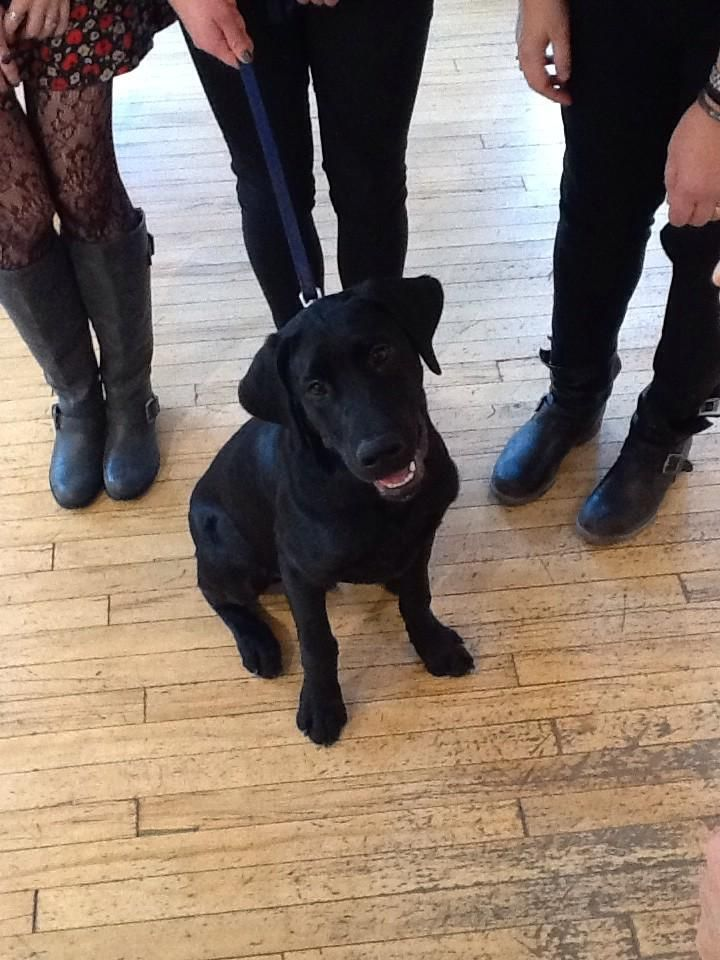 We had a visitor in the store today, meet Jet! #blacklab #puppy #welovedogs #Winnipeg