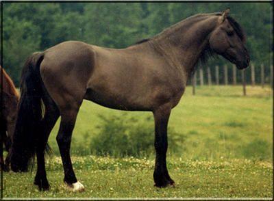 Kiger Mustang Geronimo aka