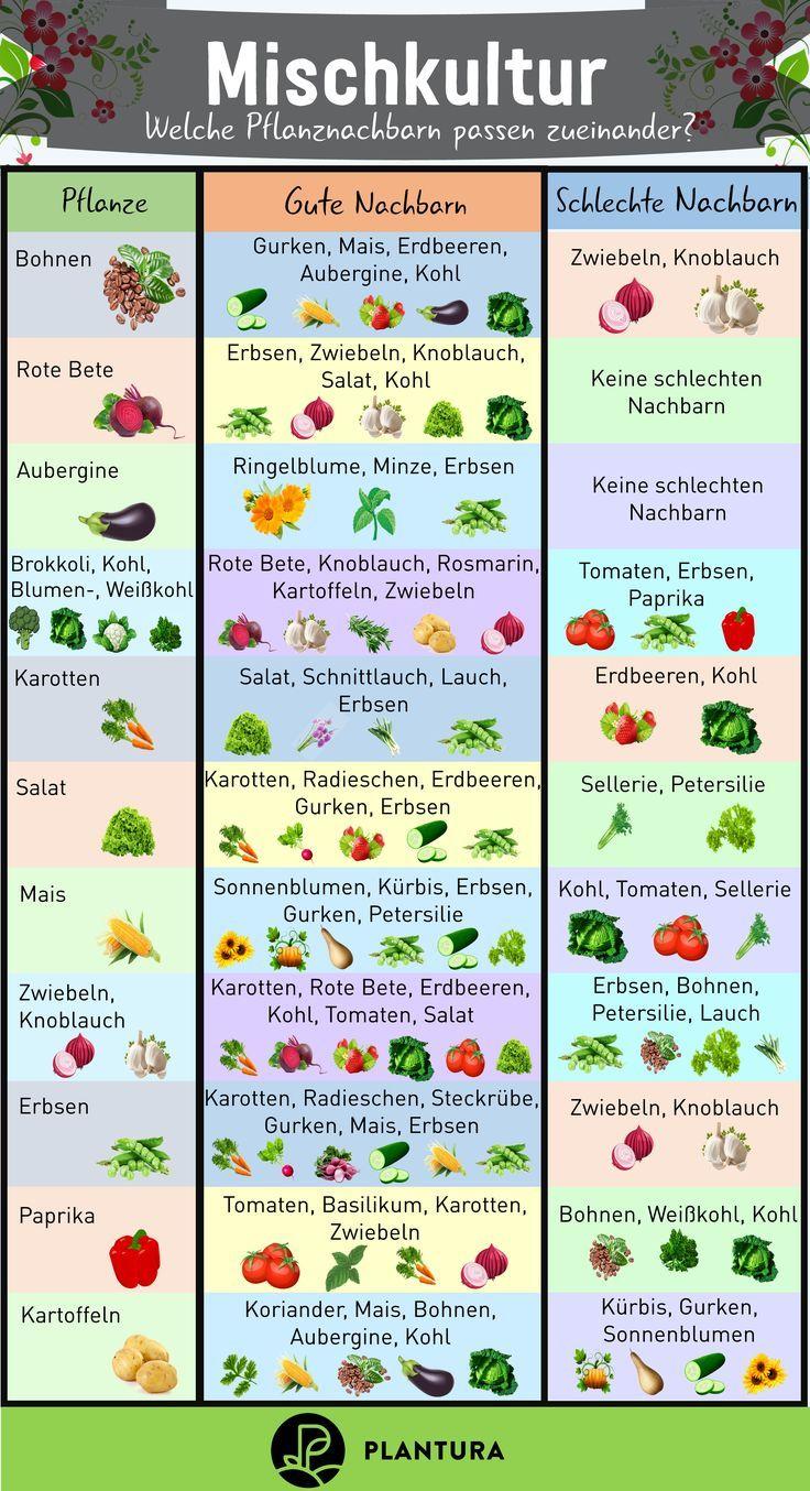Mischkultur Welche Pflanzen Passen Zusammen Plantura In 2020 Garten Anpflanzen Garten Bepflanzen Mischkultur