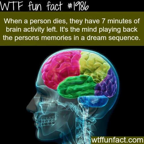 WTF Fun Fact When a person dies, they have 7 minutes of brain activity left. It's the mind playing back the person's memories in a dream sequence.