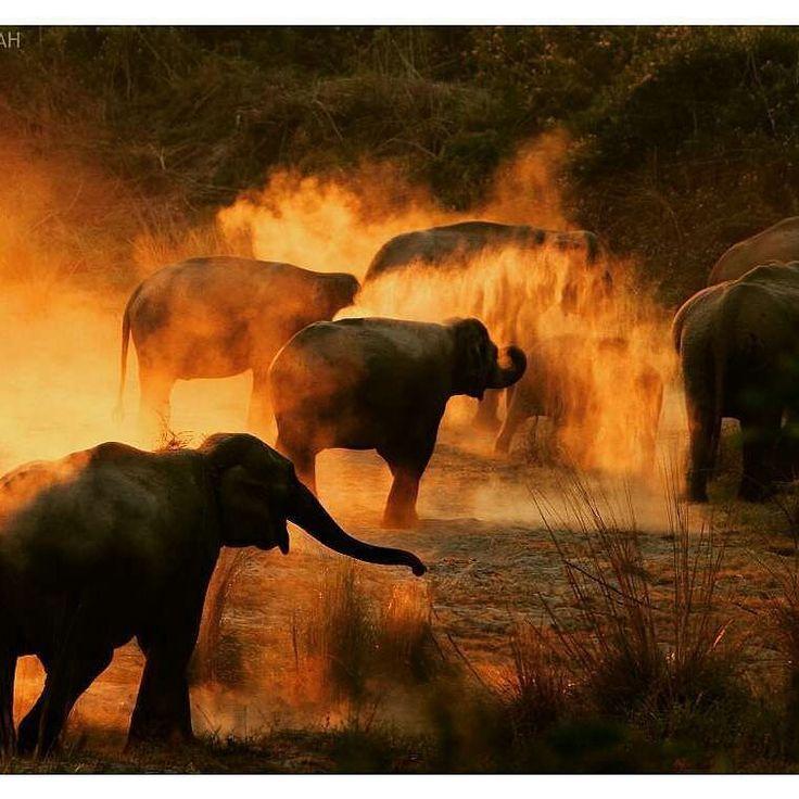 Magnificent photo Credit : @anumarwah12 - Elephants Dusting at Jim Corbett National Park . #elephant #elephants #elephantlove