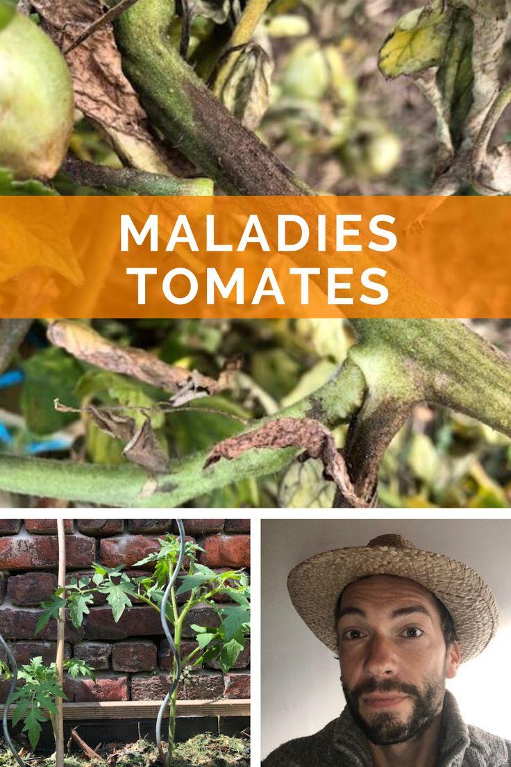 5 maladies des tomates en 2020 Maladie tomate, Comment