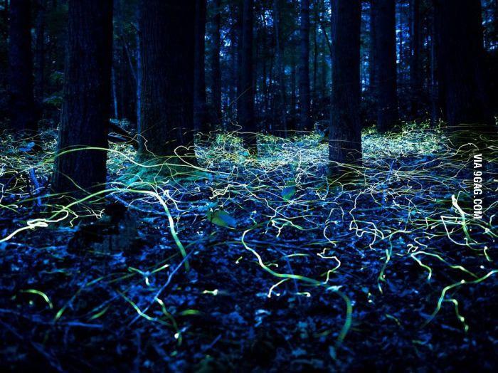 Long exposure of fireflies in North Carolina