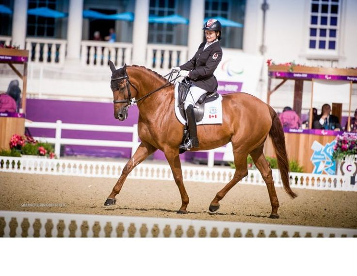 The Fédération Equestre Internationale (FEI) has announced that it is working on alternatives for the FEI World Equestrian Games™ 2018. This comes on the heels of a mutual agreement between the FEI and Canadian Comité organisateur des Jeux Équestres Mondiaux 2018 (COJEM), the organizing committee for the Games in Bromont, to terminate the contract to host the Games due to ongoing financial issues.