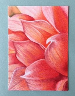 Coral Petals drawn in colored pencils, 2x4 inches on artist's trading card.