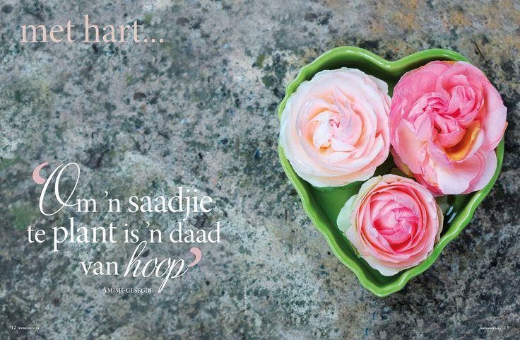 Lente/Spring, Pienk rose/ pink roses Fotograaf: Christine Ferreira www.leef.co.za