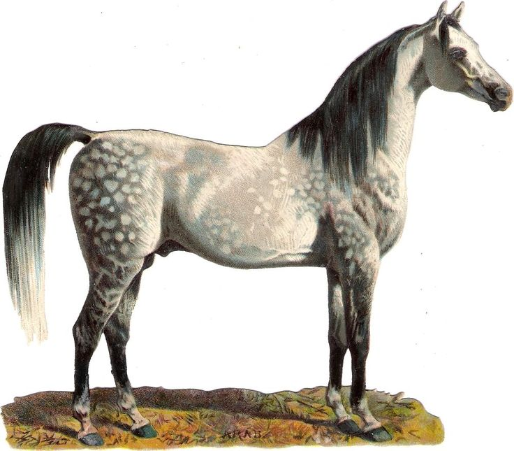 Oblaten Glanzbild scrap diecut chromo Pferd horse 14cm  arab cheval Araber: