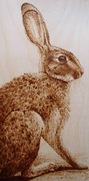 Pyrography hare