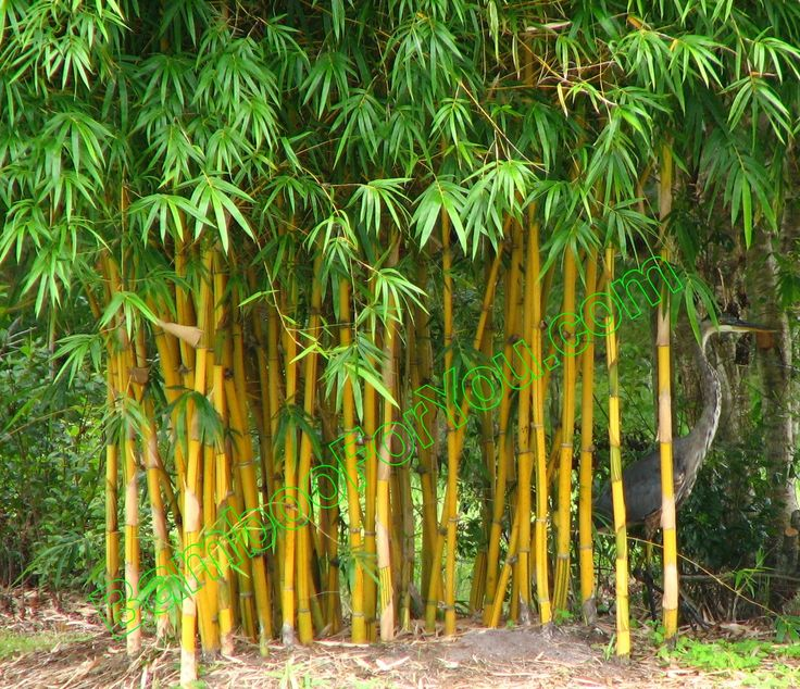 Bamboo would be cool, but I think it will be too tall