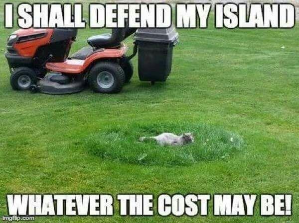 This island is MINE!