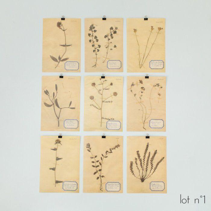 Lot de 9 affichettes cabinet de curiosité herbiers