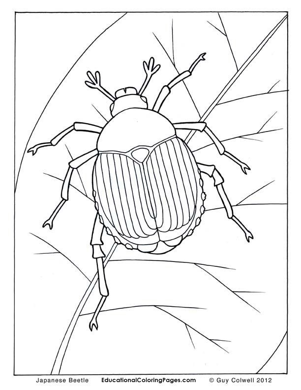 Beetle Coloring Pages Insects Coloring Pages Make Your World More