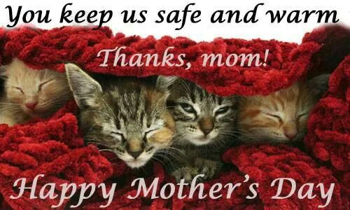 The Dogs And Cats Are Our Kids Mothers Day Quotes