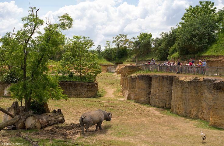 Grâce au chemin qui longe la Vallée des rhinocréos noirs, les visiteurs disposent d'une vue imprenable sur l'ensemble de l'espace.