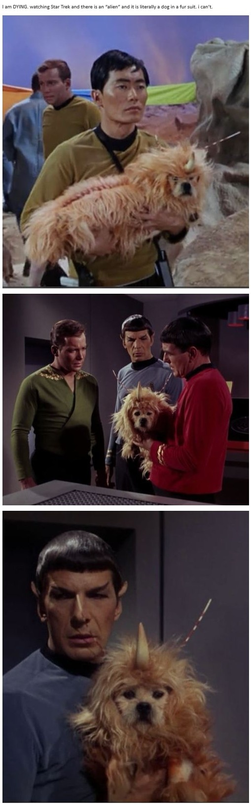 """""""I am DYING. watching Star Trek and there is an """"alien"""" and it is literally a dog in a fur suit."""" - Natalie (thispoorunfortunatesoul.tumblr.com)"""