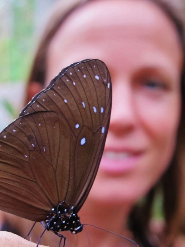 My new friend the butterfly at Tanjung Puting National Park, #Kalimantan, #Borneo #Indonesia