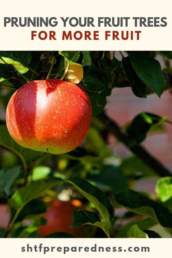 Planning A Fruit Tree Guild Shtfpreparedness Dwarf Fruit Trees Fruit Trees Gardening For Beginners