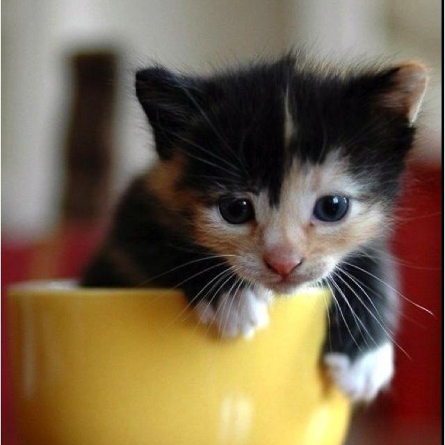Kitty....