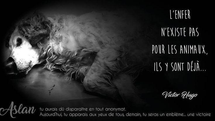 Petition · état Français: Pour la création d'une police de la protection animale · Change.org