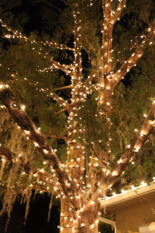 miller lights loves decorating trees both inside and outside we love coming up with ideas - Christmas Swag Lights