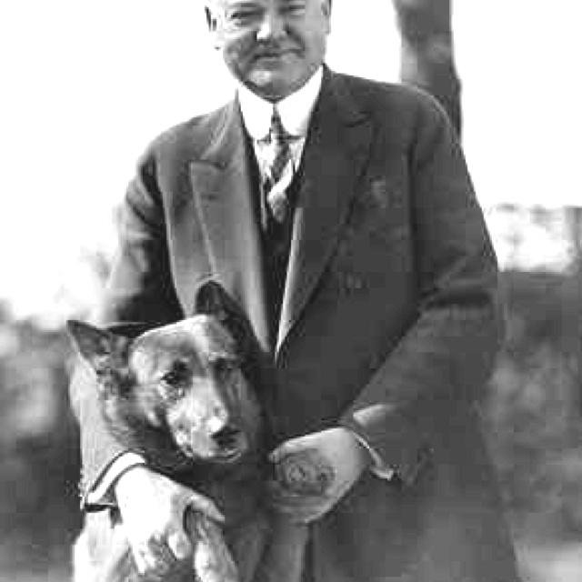 Hoover: American Presidents, King Tut, American History, Dogs, Pet, U.S. Presidents, President Herbert, Herbert Hoover, White House