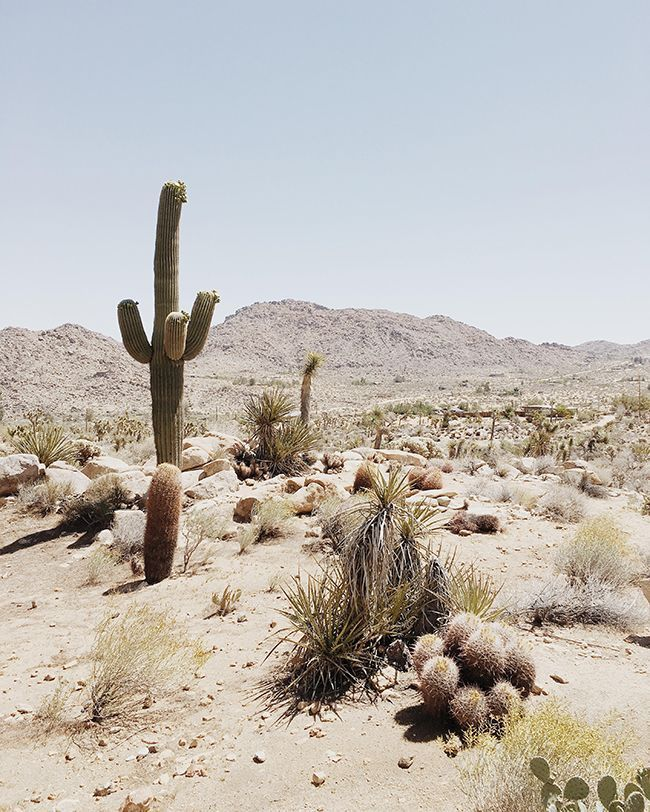 Travel Guide to Joshua Tree, California   Almost Makes Perfect