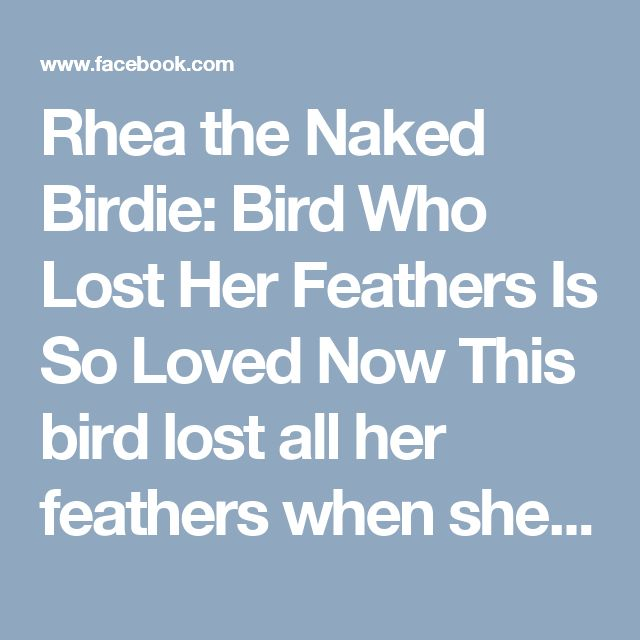 Rhea the Naked Birdie: Bird Who Lost Her Feathers Is So Loved Now This bird lost all her feathers when she got sick — but she has the BEST mom now and can't stop singing
