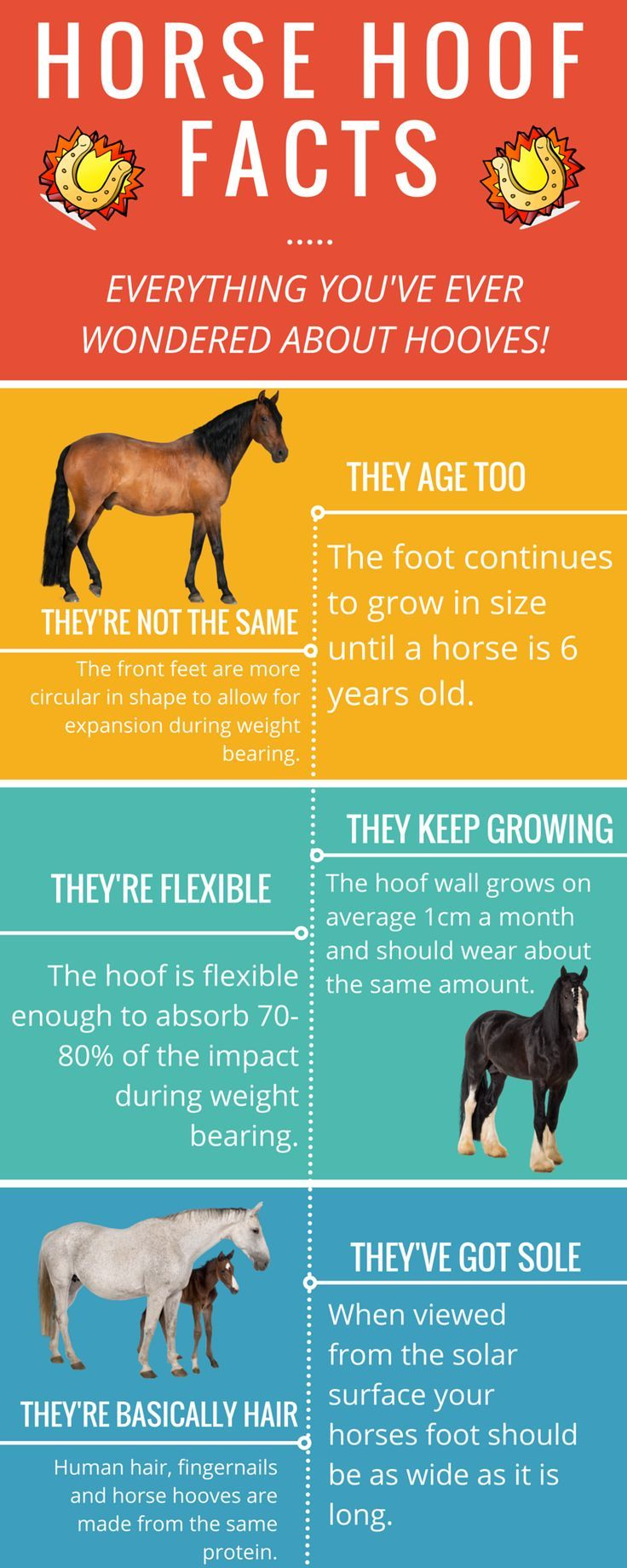 HORSE HOOF FACTS - Everything you've ever wondered about hooves! By www.brunetteinbre...
