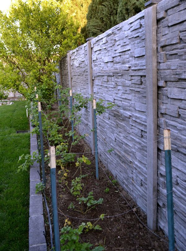 Concrete Privacy Fence Google Search Concrete Fence Wall