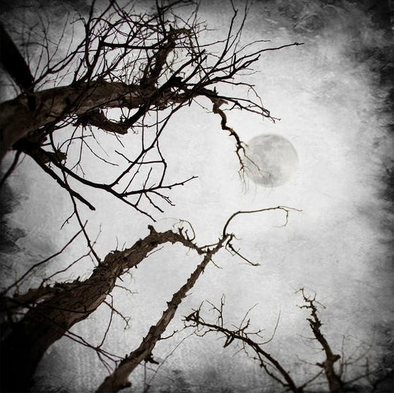 photos of the moon (16)