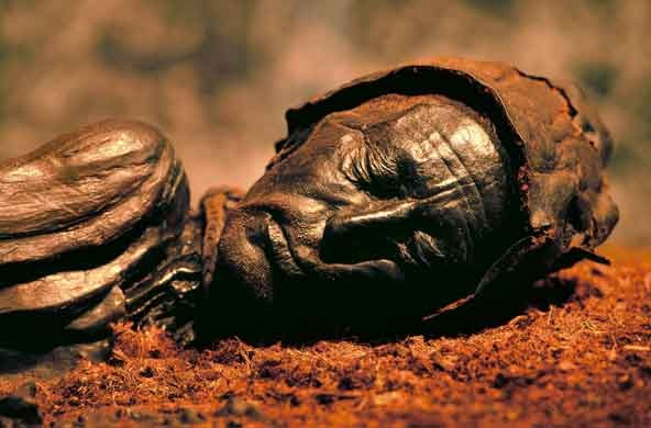 Man, discovered in a Danish Bog in 1950, is approximately 2,400 years old yet looks like he died yesterday such is the excellent degree of tissue preservation due to the antibacterial effect of the acidic bog he was found in.