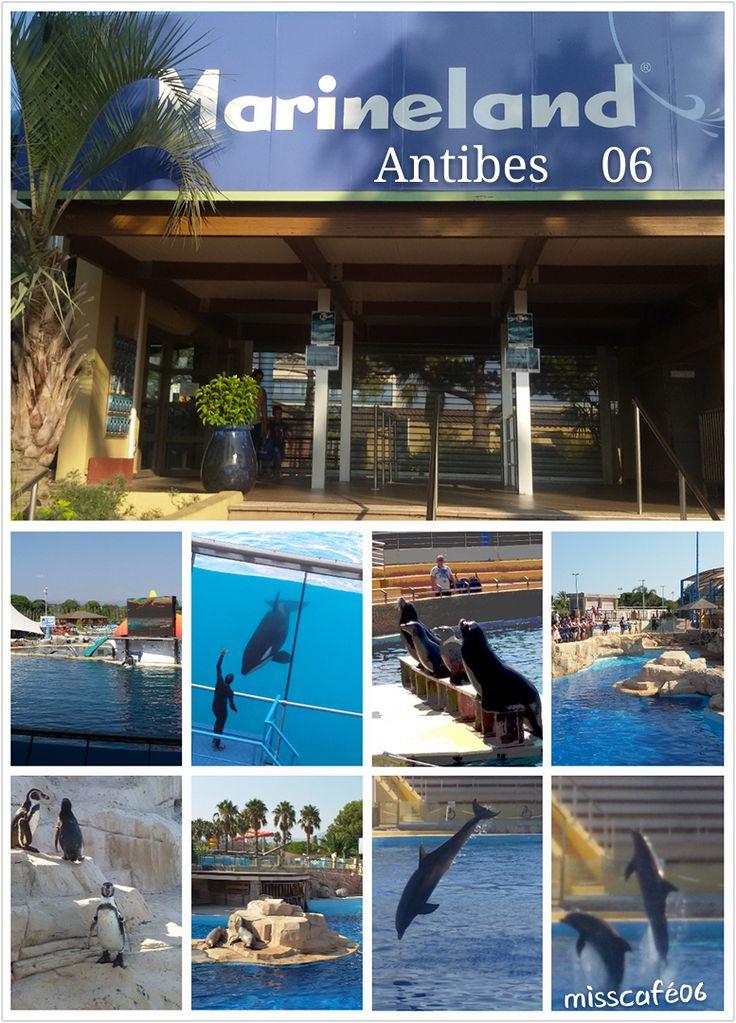 Après les inondations automne 2015, le parc d'attraction accueille de nouveau les visiteurs. Vous verrez des spectacles avec les dauphins, les orques, les otaries, mais vous aussi des pingouins, des tortues et des requins.