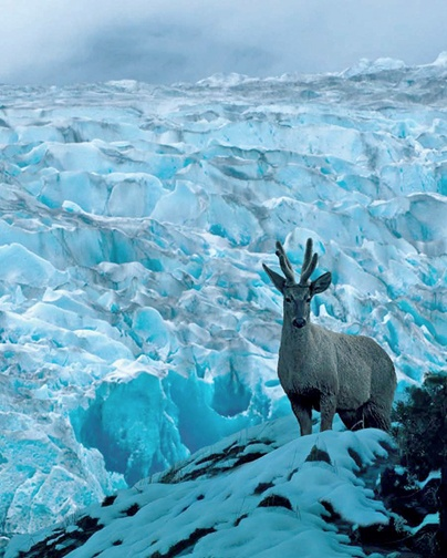 Chile's Endangered Endemic Deer: Los Últimos Senderos del Huemul | D. Aldridge, R. López, C. Saucedo & A. Vila - 2005  [Free Book Download http://issuu.com/negriedwards/docs/los__ltimos_senderos_del_huemul?mode=window=doublePage]