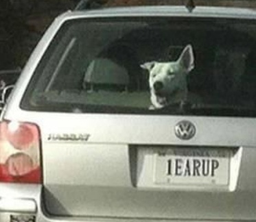 59 Best License Plates Images On Pinterest