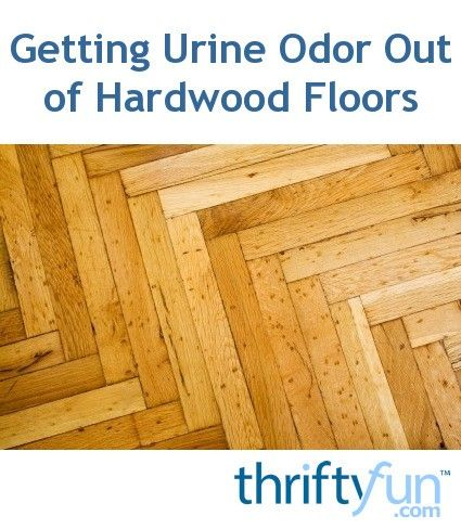 Accidents happen, but removing urine odors from wood floors can seem like a  big job - 25+ Best Ideas About Cleaning Pet Urine On Pinterest Pet Urine