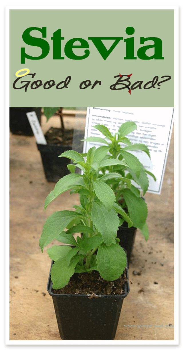 Growing Stevia How To Plant Grow And Harvest Stevia: 32 Best Trim Healthy Mama Tips & Testimonials Images On