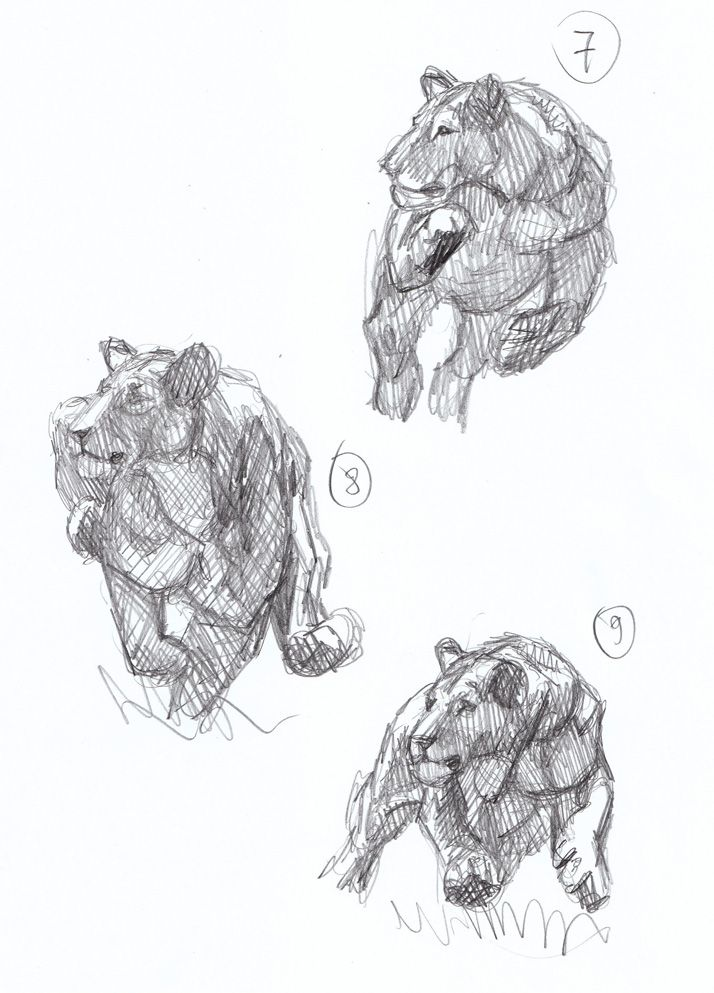Lion running sketches, Mauricio Antón