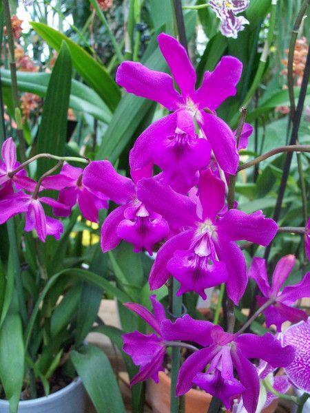 Цветы | Записи в рубрике Цветы | Дневник Амиа : LiveInternet - Российский Сервис Онлайн-Дневников
