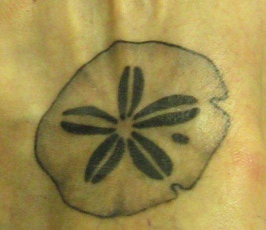 sand dollar tattoos - Google Search: Tattoo Ideas, Photos, Sands Dollar Tattoo, Sand Dollar Tattoo
