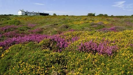 Dunwich Heath and Beach - Visitor information - National Trust