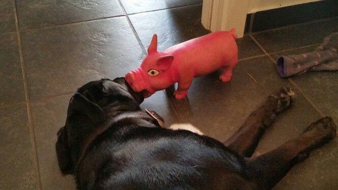 Lucky og hans elskede gris