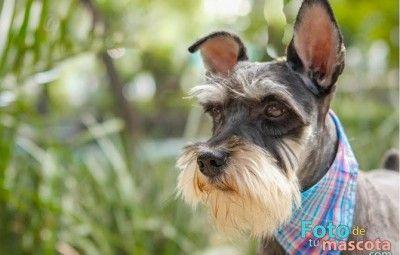 Super Cachorros – ¿Puedo darle Frutas y Verduras a mi Super Cachorro?