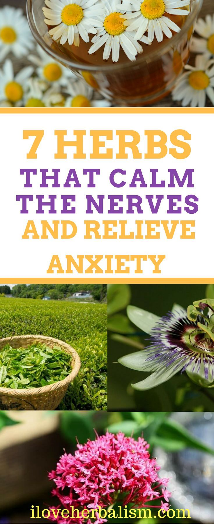7 Herbs That Calm The Nerves And Relieve Anxiety Naturally!